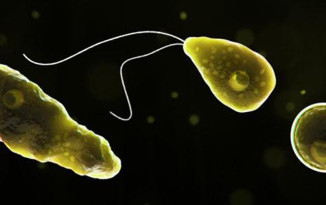 Brain-Eating Amoeba Blamed for Death
