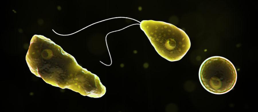 https%3A%2F%2Fwww.cdc.gov%2Fparasites%2Fnaegleria%2Findex.html
