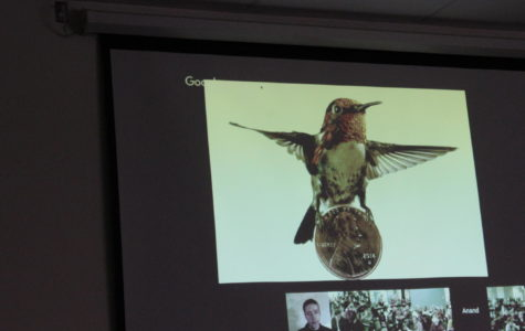 Smallest hummingbird taken by Anand A. Varma. National Geographic presentation.