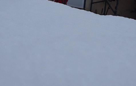 Rovana Snow
