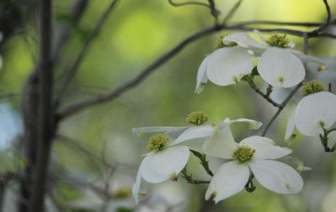 Spring Day 4.26.19